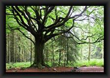 icone_arbres
