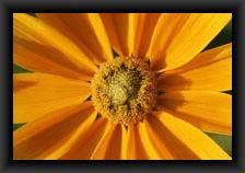 icone_fleurs_cultivees